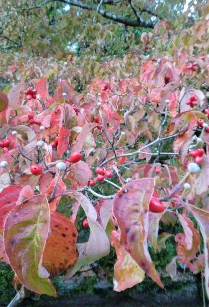 berries across.jpg