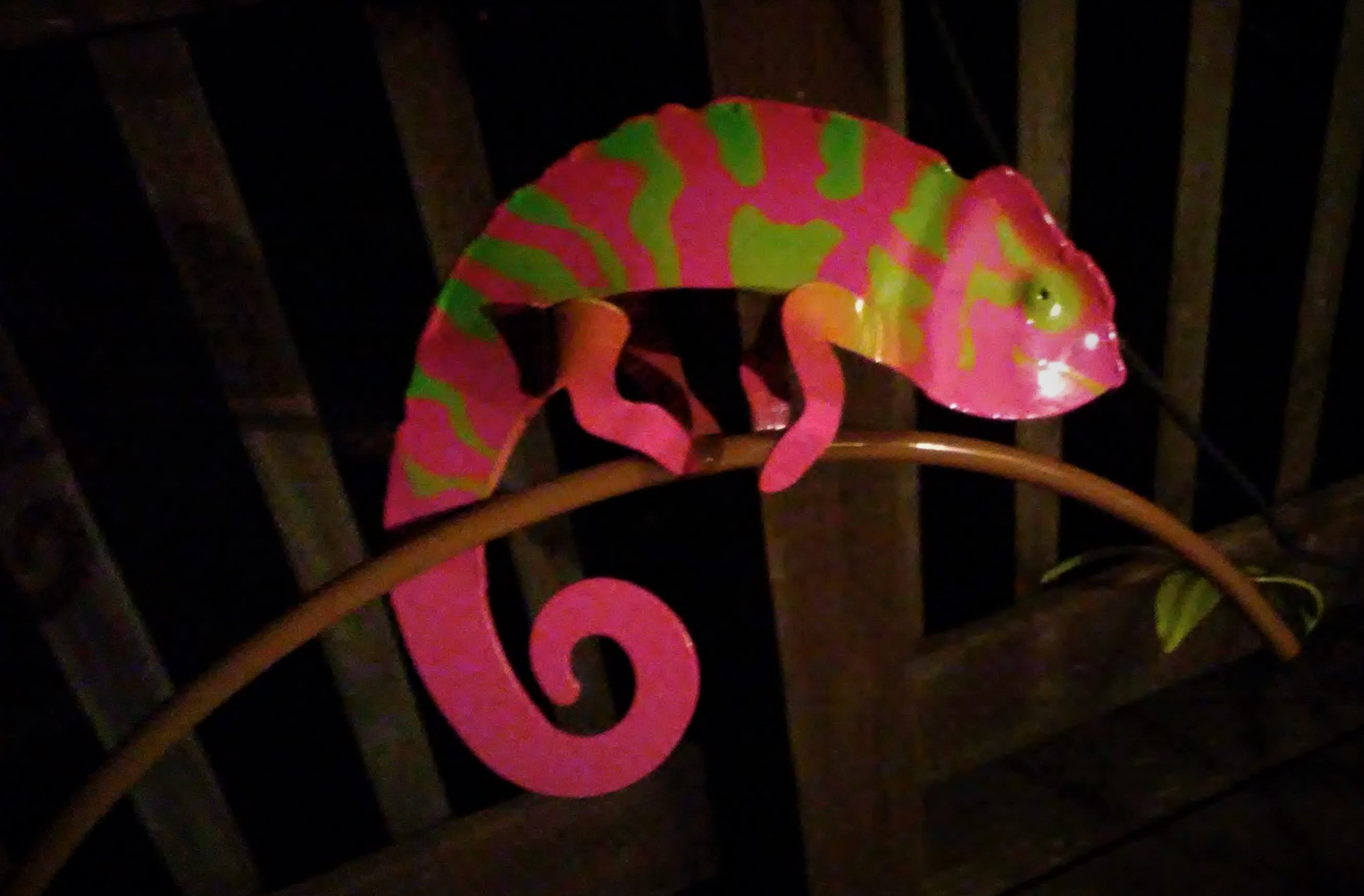 my chameleon on porch.jpg